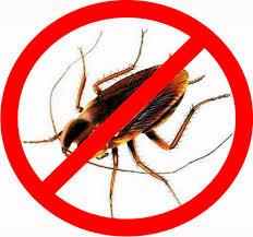 Дезинсекция тараканов в Москве